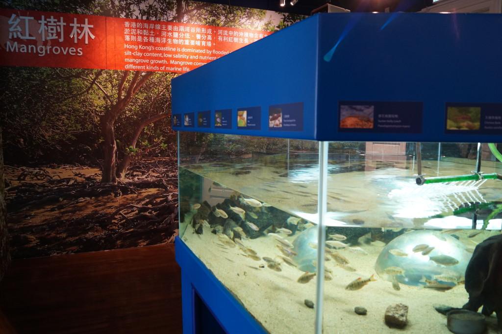 大潭 紅屋 林邊生物多樣性自然教育中心