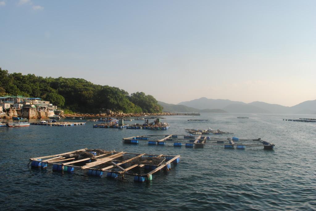 塔門島的魚排