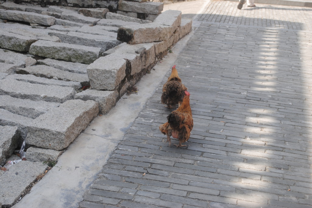 大鵬所城 雞 雞