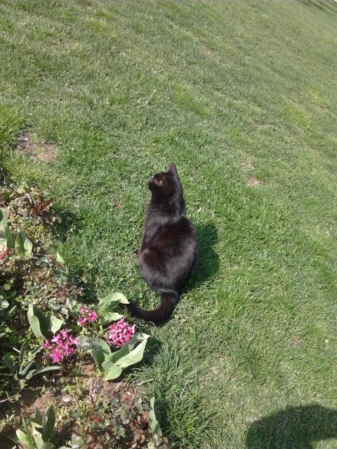 土耳其 伊斯坦堡 托卡比皇宮 黑貓