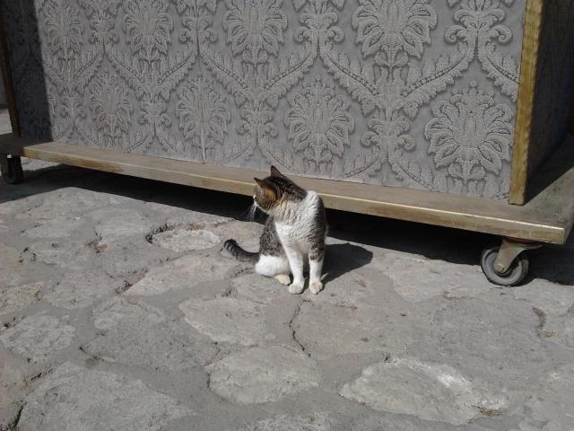 土耳其 伊斯坦堡 托卡比皇宮 小貓