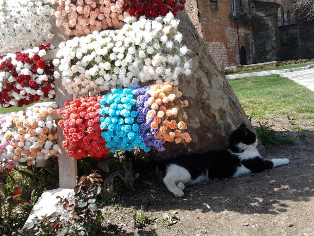 土耳其 伊斯坦堡 托卡比皇宮 貓咪