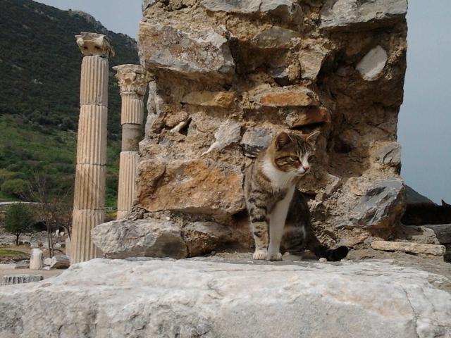 土耳其 Ephesus 貓