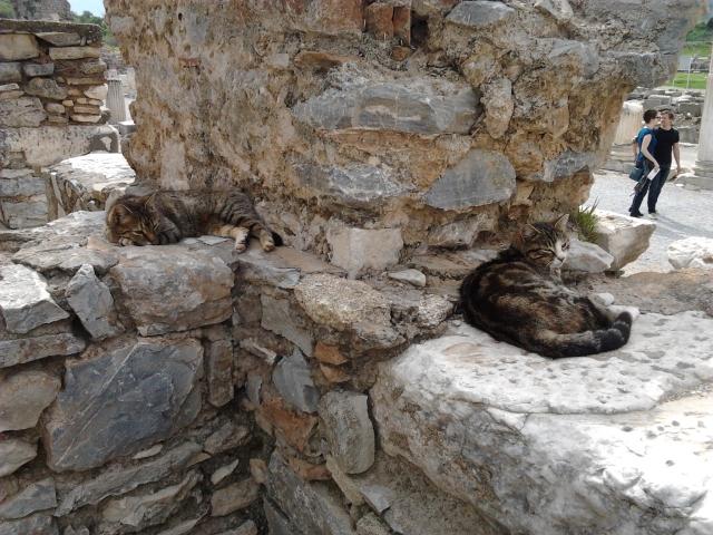土耳其 Ephesus 流浪貓