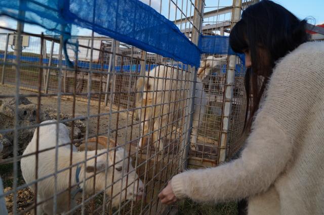 沖繩 殘波岬公園 羊
