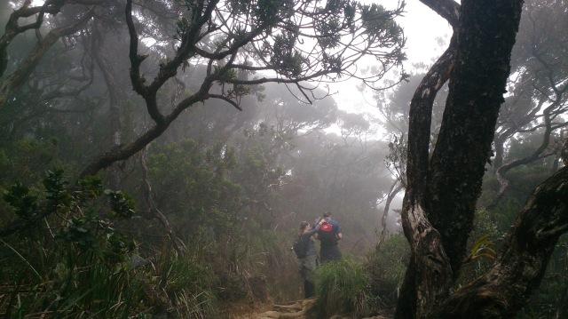 沙巴 神山 大霧