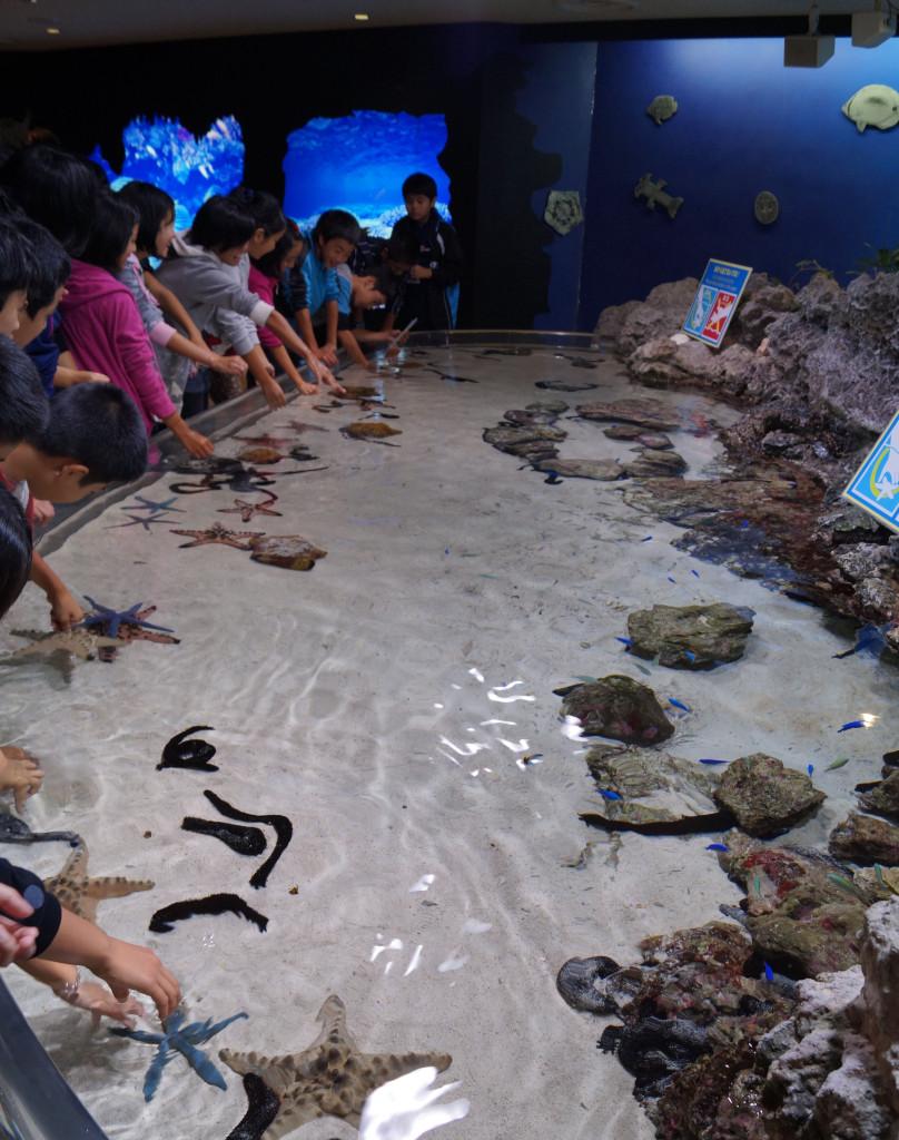 沖繩美麗海水族館 淺水玩樂區