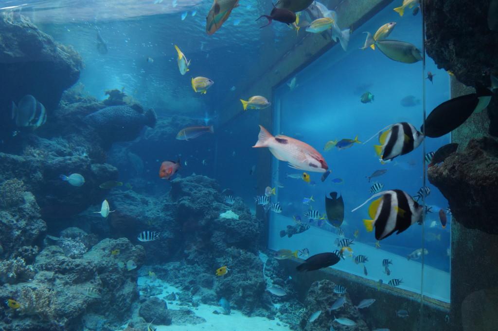沖繩美麗海水族館 大魚缸