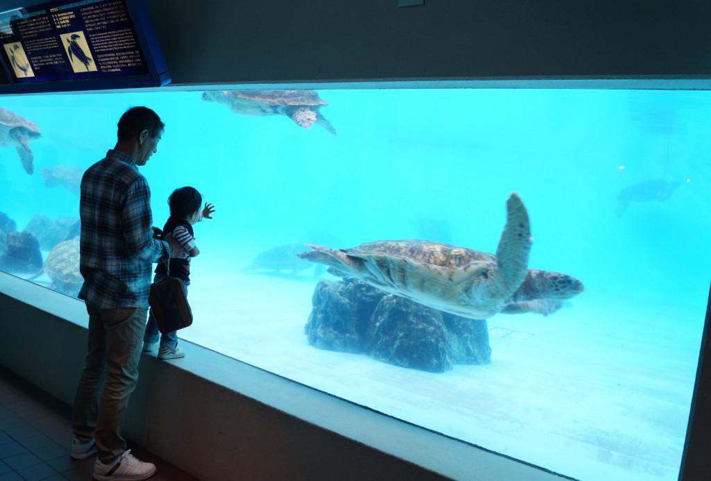 沖繩美麗海水族館 海龜館