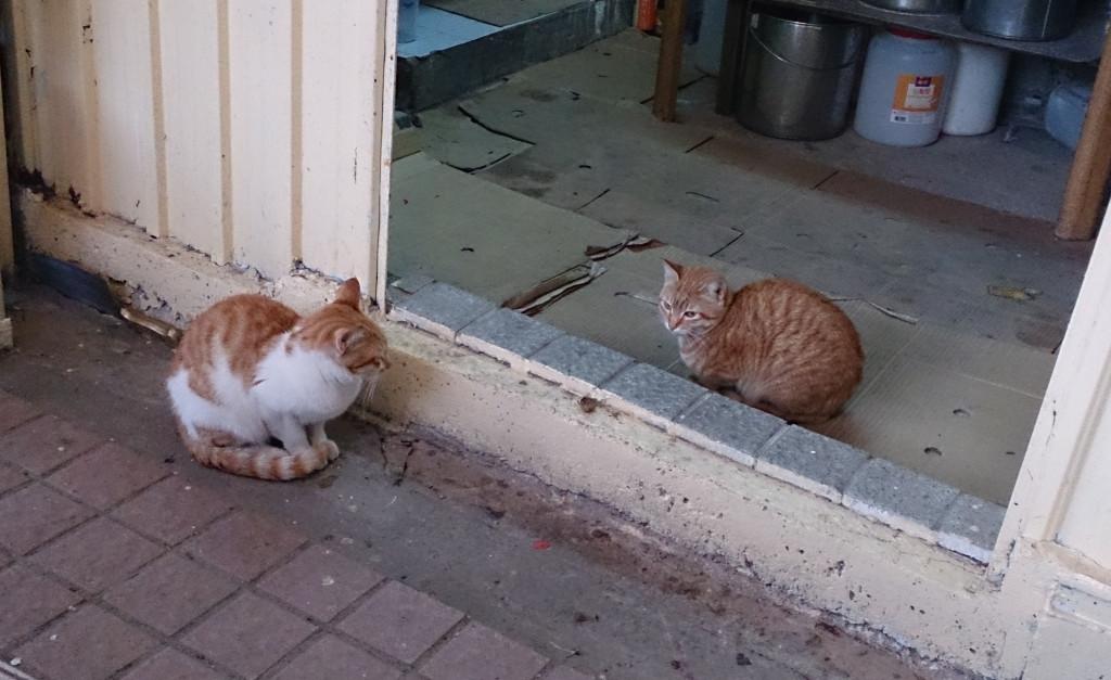 布袋澳小食店看門雙貓